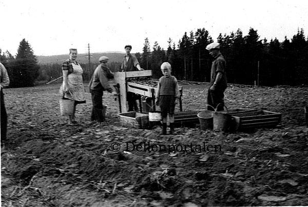 ang-157-potatissorterare