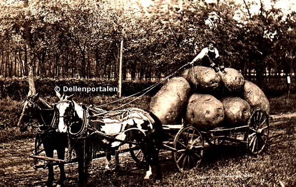 var-009-stora-potatisar-omg