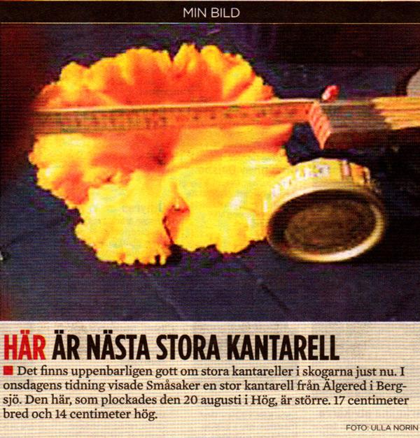 sha-011-kantarell