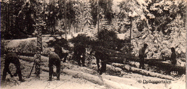 skog-010-arbete
