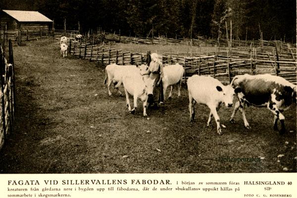 fv-014-sillerv