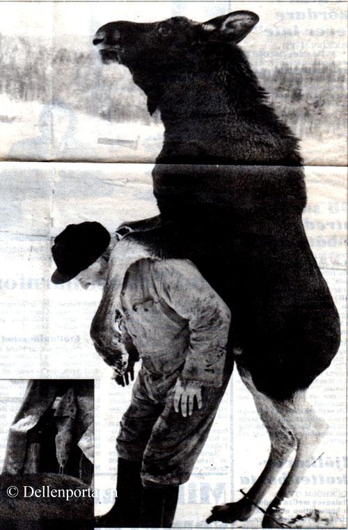 sla-033-1988