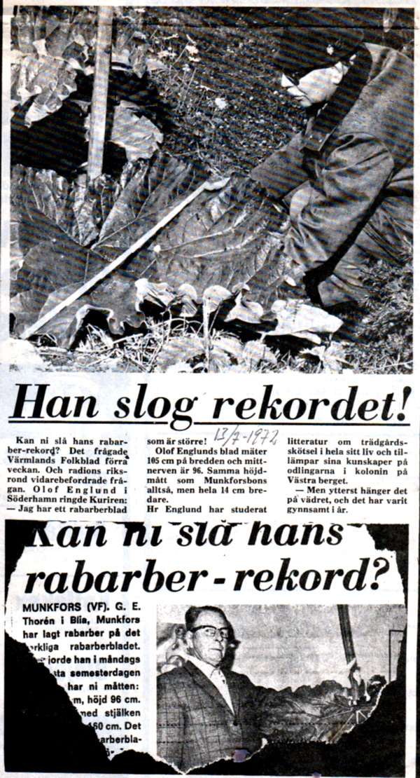 sha-013-rabarberblad
