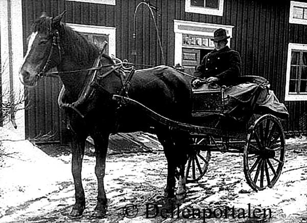 pid-008-hest