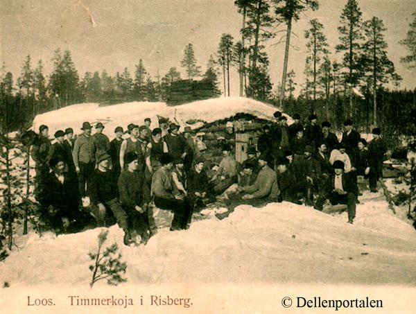 skog-005-koja-los
