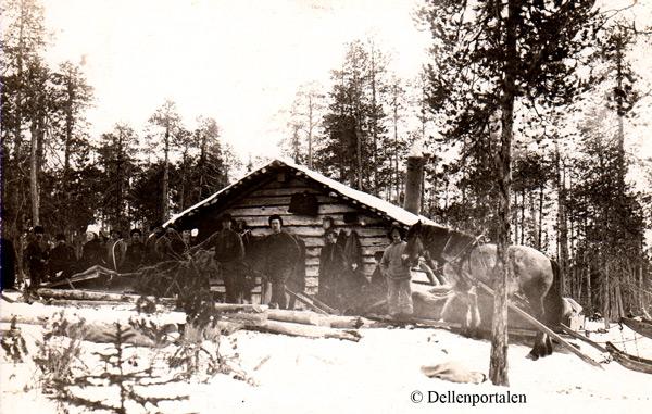 skog-006-koja