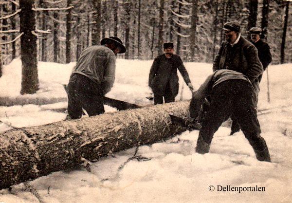 skog-008-avverkning