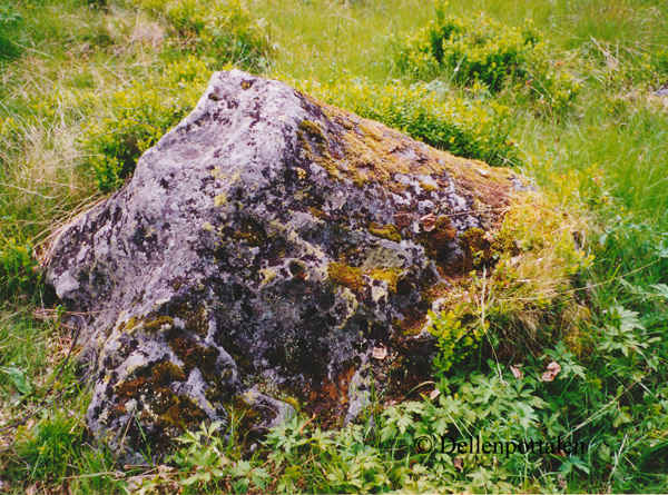 nv-020-dyrv-sten