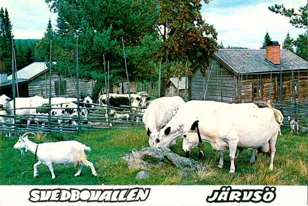 jv-017-svedbo