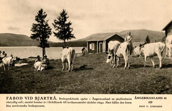 vb-097-bjarta-